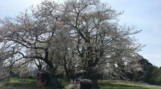 郷土に触れて春を感じて親睦を深めて‼︎